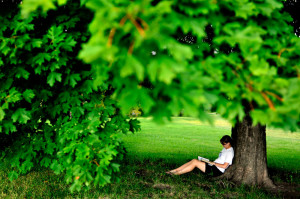 shady tree reading