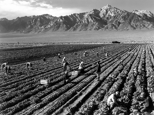 labor workers farm